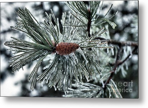 Pine Cone Metal Print featuring the photograph Icy Pine by Steve Edwards