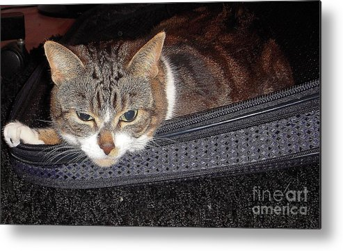 Cat Metal Print featuring the photograph Ready For A Trip by Vesna Antic