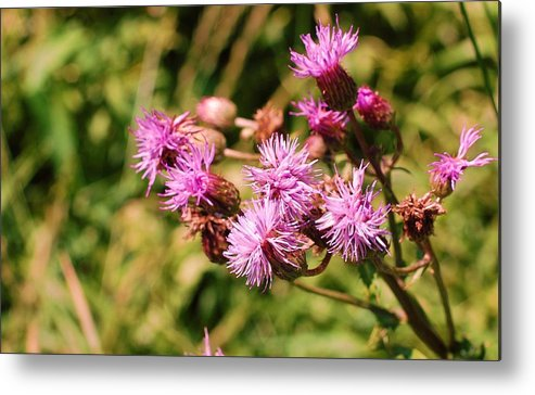 Flower Metal Print featuring the photograph Roadside Beauty by Jame Hayes