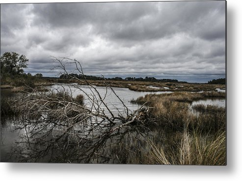 Landscape Metal Print featuring the photograph Beautifully Fallen by Steven Taylor