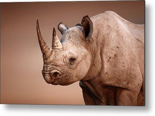 Rhinoceros Metal Print featuring the photograph Black Rhinoceros Portrait by Johan Swanepoel