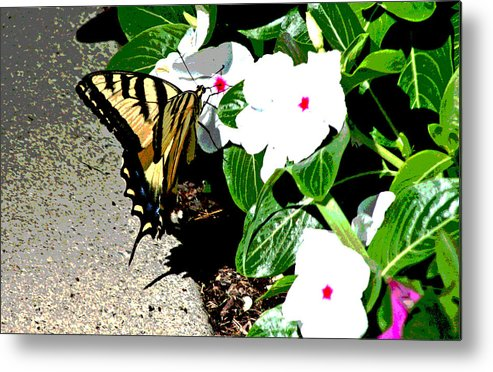Metal Print featuring the photograph Delta Butterfly Cafe by Joseph Coulombe