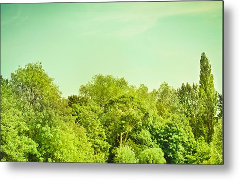 Background Metal Print featuring the photograph Forest by Tom Gowanlock