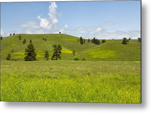 Tree Metal Print featuring the photograph Rangelands Of Custer State Park by John M Bailey