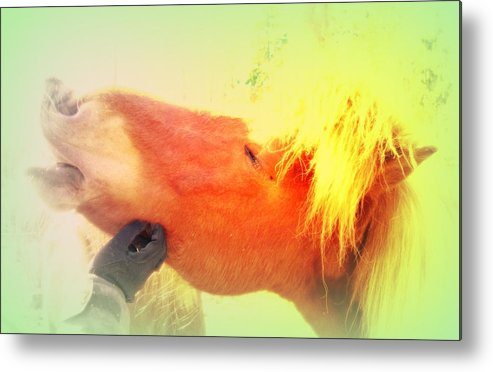 Horse Metal Print featuring the photograph scratch me now and I will carry you anywhere later on by Hilde Widerberg