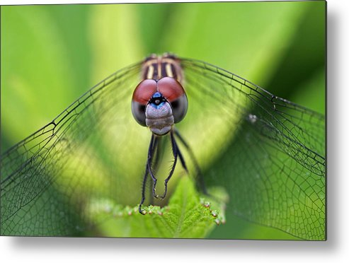 Dragonfly Metal Print featuring the photograph Staring Contest by Juergen Roth