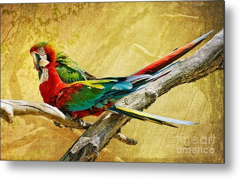 Parrot Metal Print featuring the photograph Sweet Sweet Love by Lois Bryan