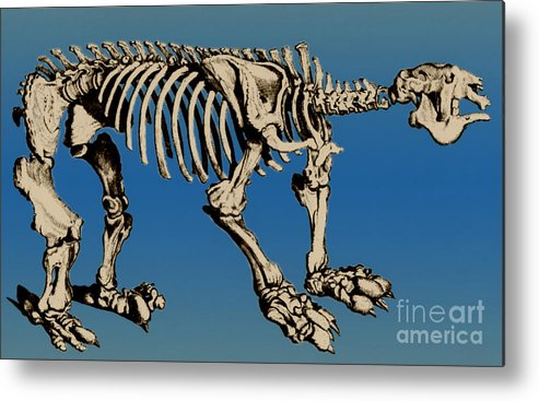 History Metal Print featuring the photograph Megatherium Extinct Ground Sloth by Science Source