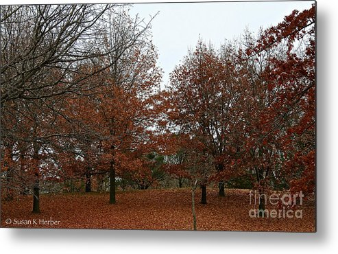 Outdoors Metal Print featuring the photograph Carpeted by Susan Herber
