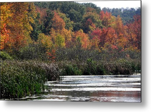 Swamp Metal Print featuring the photograph Even Swamps Have Beauty by Kim Galluzzo Wozniak