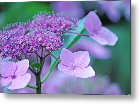 Becky Metal Print featuring the photograph Lace by Becky Lodes