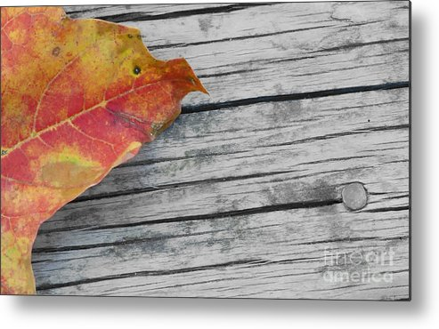 Autumn Metal Print featuring the photograph Old by JT Lewis