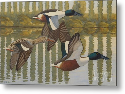 Ducks Metal Print featuring the painting Shovelers by Nikolai Kraneis