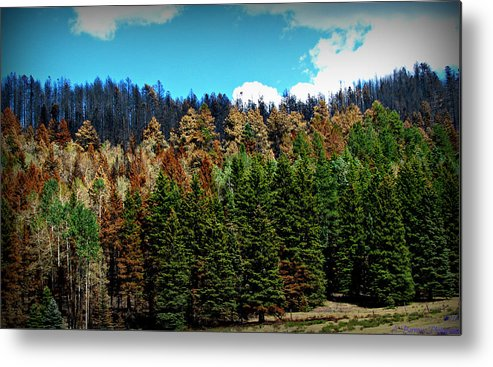 Las Conchas Fire Metal Print featuring the photograph Touched By Fire by Aaron Burrows