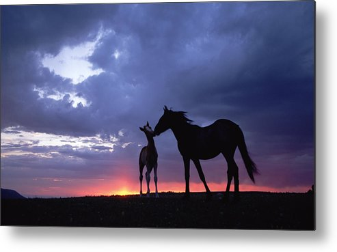 Horse Metal Print featuring the digital art Horse by Dorothy Binder