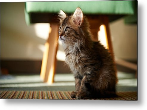 Cat Metal Print featuring the digital art Cat by Dorothy Binder