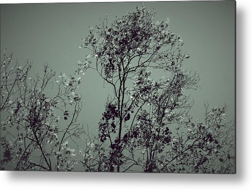 Beautiful Trees Metal Print featuring the photograph All With Time... by The Art Of Marilyn Ridoutt-Greene