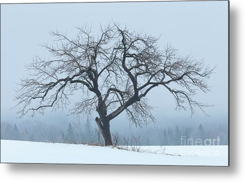 Winter Metal Print featuring the photograph Apple Tree In Winter Fog by Alan L Graham