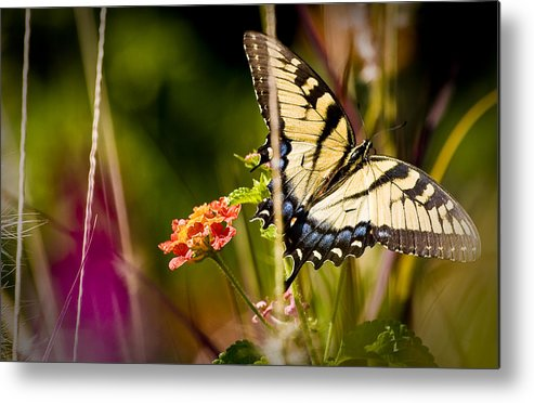Nature Metal Print featuring the photograph Butterfly Jungle by Ches Black