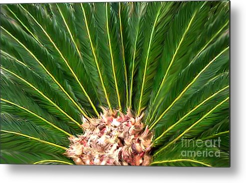 Nature Metal Print featuring the photograph Centered Palm by Lucyna A M Green