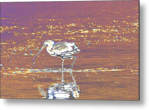 Manipulated Metal Print featuring the photograph Egret II by John Roncinske