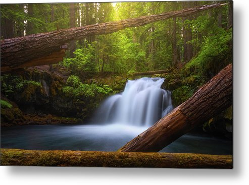 Sunlight Metal Print featuring the photograph Enchanted Forest by Darren White