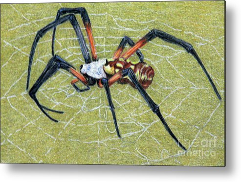 Fuqua - Artwork Metal Print featuring the drawing Female Orb Spider -1 by Beverly Fuqua