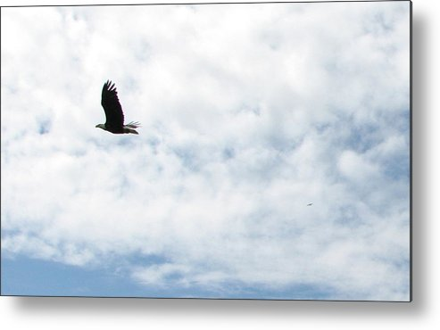 Eagle Metal Print featuring the photograph Flying Eagle by April Camenisch