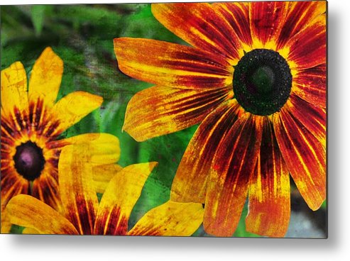 Flower Metal Print featuring the photograph Gloriosa Daisy by JAMART Photography