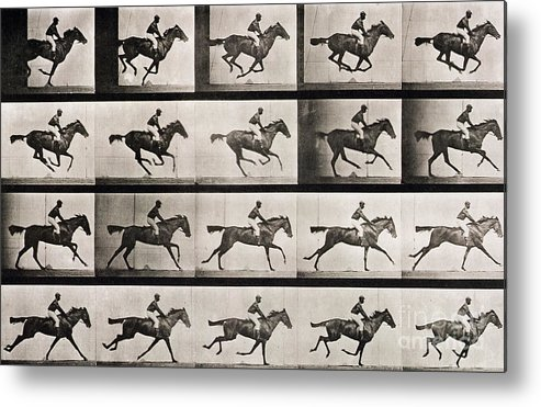 Muybridge Metal Print Featuring The Photograph Jockey On A Galloping Horse By Eadweard