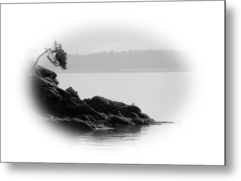 Black Metal Print featuring the photograph Lonley Gull by J D Banks
