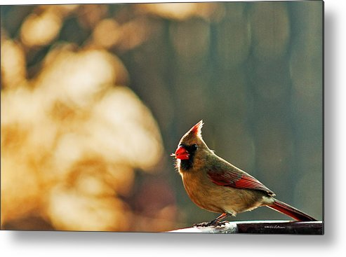 Northern Cardinal Metal Print featuring the photograph Mouthful by Edward Peterson