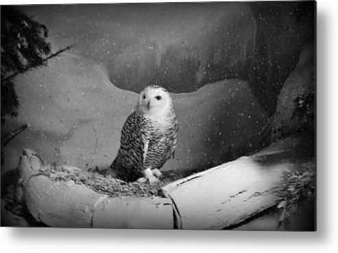 Snowy Owl Metal Print featuring the digital art Snowy Owl by Dorothy Binder