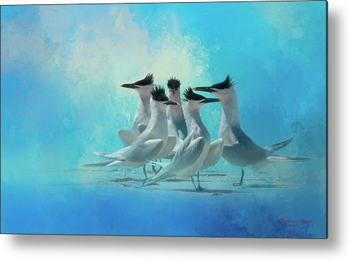 Egmont Key Metal Print featuring the photograph Tern And Look by Marvin Spates