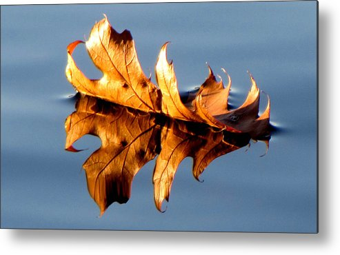 Landscape Metal Print featuring the photograph The Leaf by Tina Granitsas
