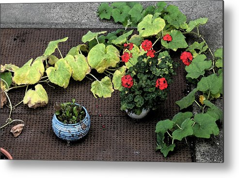 Flowers Metal Print featuring the photograph Urban Flowers by Gary Everson