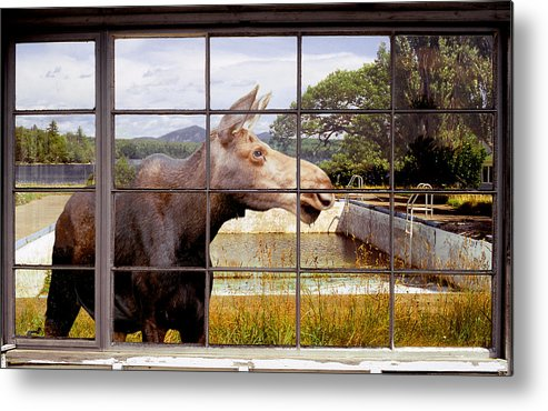 Moose Metal Print featuring the photograph Window - Moosehead Lake by Peter J Sucy