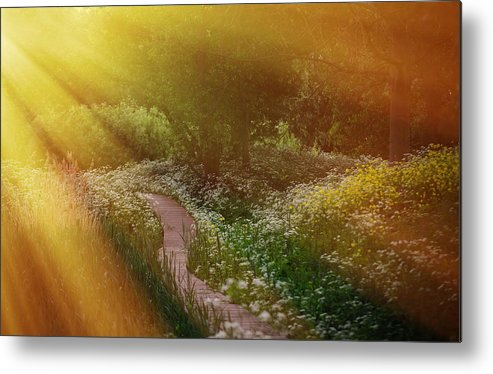 Nature Metal Print featuring the photograph Angel Rays. Follow The Sun by Jenny Rainbow
