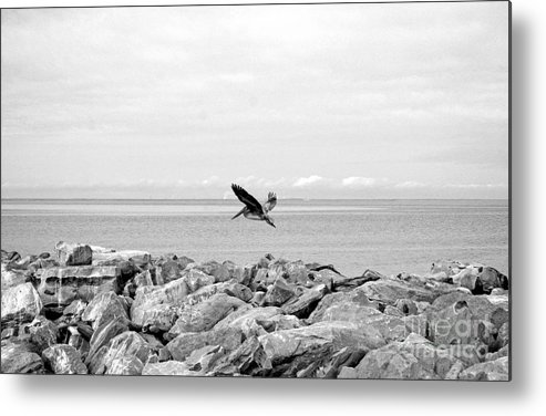 Landscape Metal Print featuring the photograph Brown Pelican In Flight by Earl Johnson