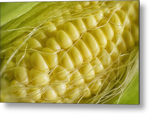 Corn Metal Print featuring the photograph Corn by Mary Lane