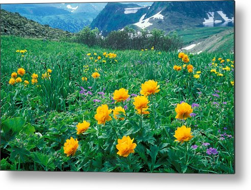 Flora; Flower; Flowers; Globe-flower; Hills & Mountains; Landscape; Mountain; Mountains; Nature; Nobody; Outdoors; Outside; Plant; Plants; Scenery; Scenic; Scenics Metal Print featuring the photograph Flowers by Anonymous