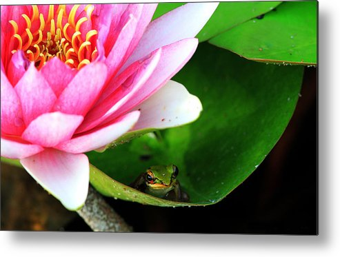 Frog Metal Print featuring the photograph Beautiful Life by Miel Paculanang