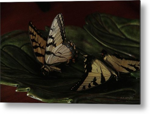 Butterfly Metal Print featuring the photograph Grandma's Attic by Yvonne Wright