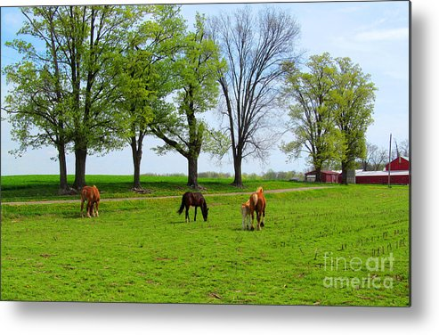 Indiana Metal Print featuring the photograph Horse Country by Tina M Wenger
