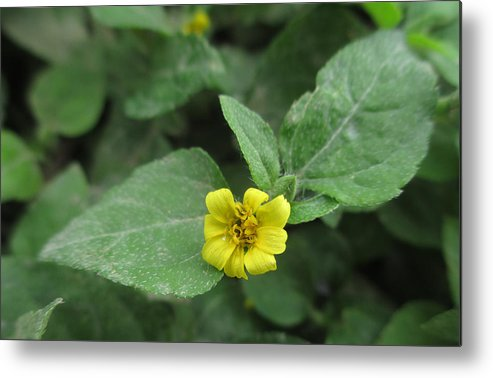 Flowers Metal Print featuring the photograph Little Yellow Fellow by Kevin Caudill