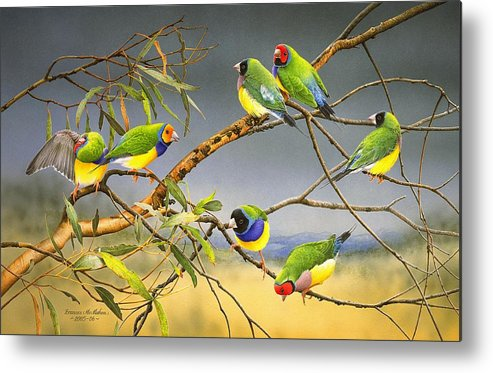 Gouldian Finches Metal Print featuring the painting Lucky Seven - Gouldian Finches by Frances McMahon