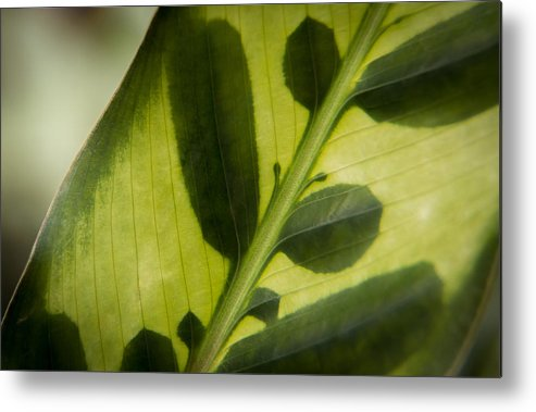 Leaf Metal Print featuring the photograph Pretty Pattern by Debbie Orlando
