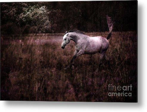 Grey Horse Metal Print featuring the photograph Running Through The Purple World by Angel Ciesniarska