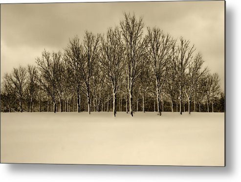 Snow Metal Print featuring the photograph Snowy Tree Line - Sepia Tint by Clay Swatzell