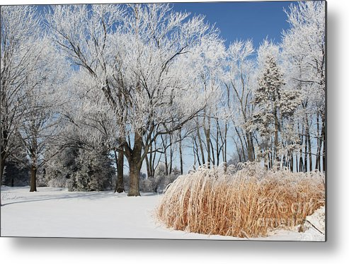 Winter Wonderland Metal Print featuring the photograph Winter Wonderland by Robyn Saunders